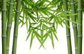 Copropriété: les bambous de la discorde (commentaire de jurisprudence)