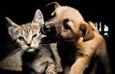 Les antiparasitaires pour chiens sont interdits aux chats
