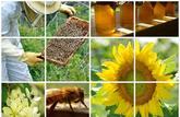 Bilan: ciel plombé sur le miel et les abeilles