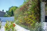 Un mur végétalisé: un support pour votre écran vert