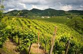 Marché foncier rural: la demande reste soutenue pour les terres et vignobles de qualité