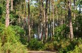 Forêts, un nouveau souffle