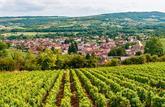 Forêts et vignes en parts: les atouts de  la défiscalisation rurale