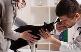 La marge des vétérinaires sur les médicaments est de 40 %!