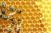 Certains miels sont contaminés par des substances toxiques