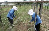 Le travail illégal est plus sévèrement puni