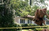 Un arbre qui s'incline chez le voisin est un trouble de voisinage