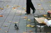 Jusqu'à 450 € d'amende en cas d'abandon de déchets dans la rue