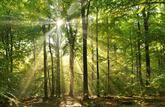 Les particuliers achètent de petites forêts pour le bois de chauffage
