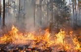 Feux de forêts: les bons gestes pour se protéger