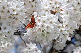 Allergies aux pollens: comment les combattre