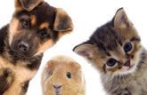 Shopping: un poil de design pour nos animaux