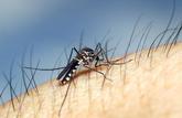 Moustiques: une quarantaine de départements sont classés à risque