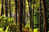 Diversification: investir durablement en parts de forêt