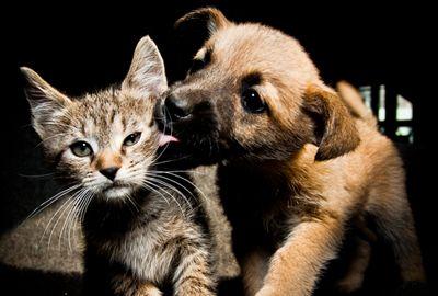 50 % d'anomalie sur l'étiquetage des aliments pour animaux domestiques