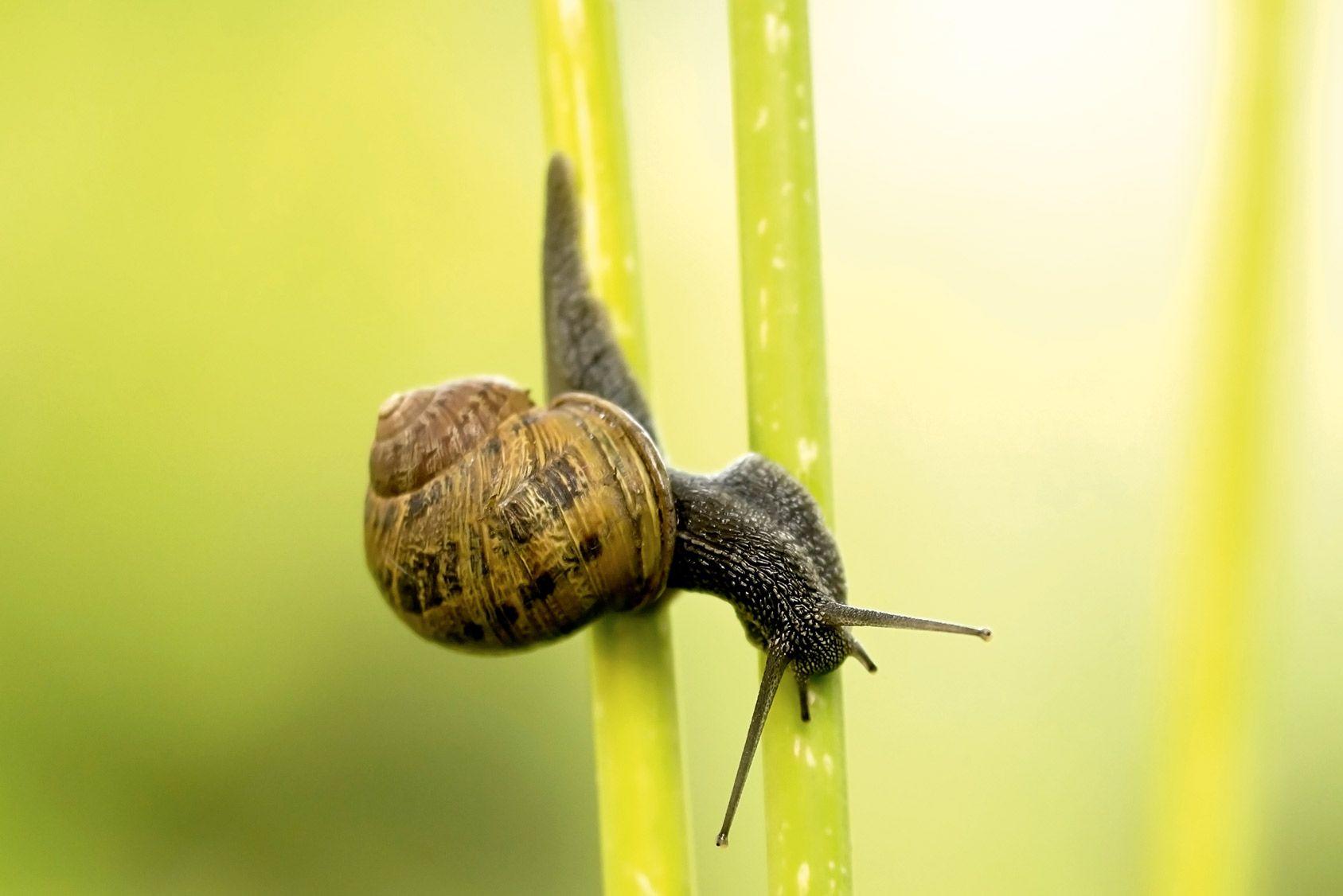 Arnaque: la bave d'escargot contre l'arthrose