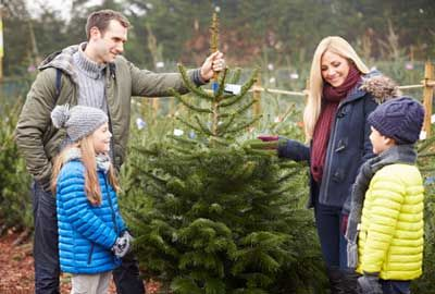 3 choses à savoir pour élire le bon sapin de Noël