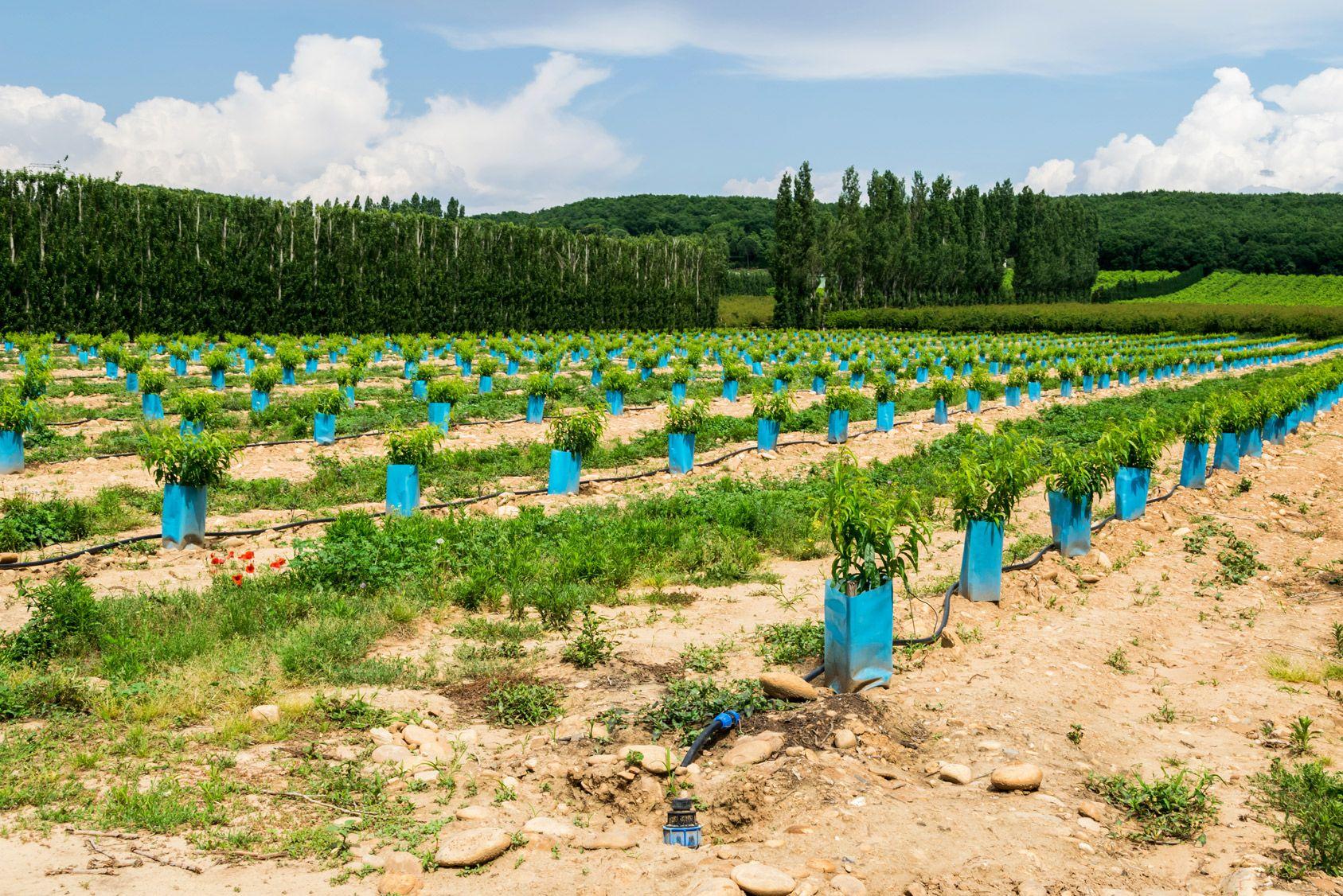 Voisinage: On a planté des arbres sur mon terrain!