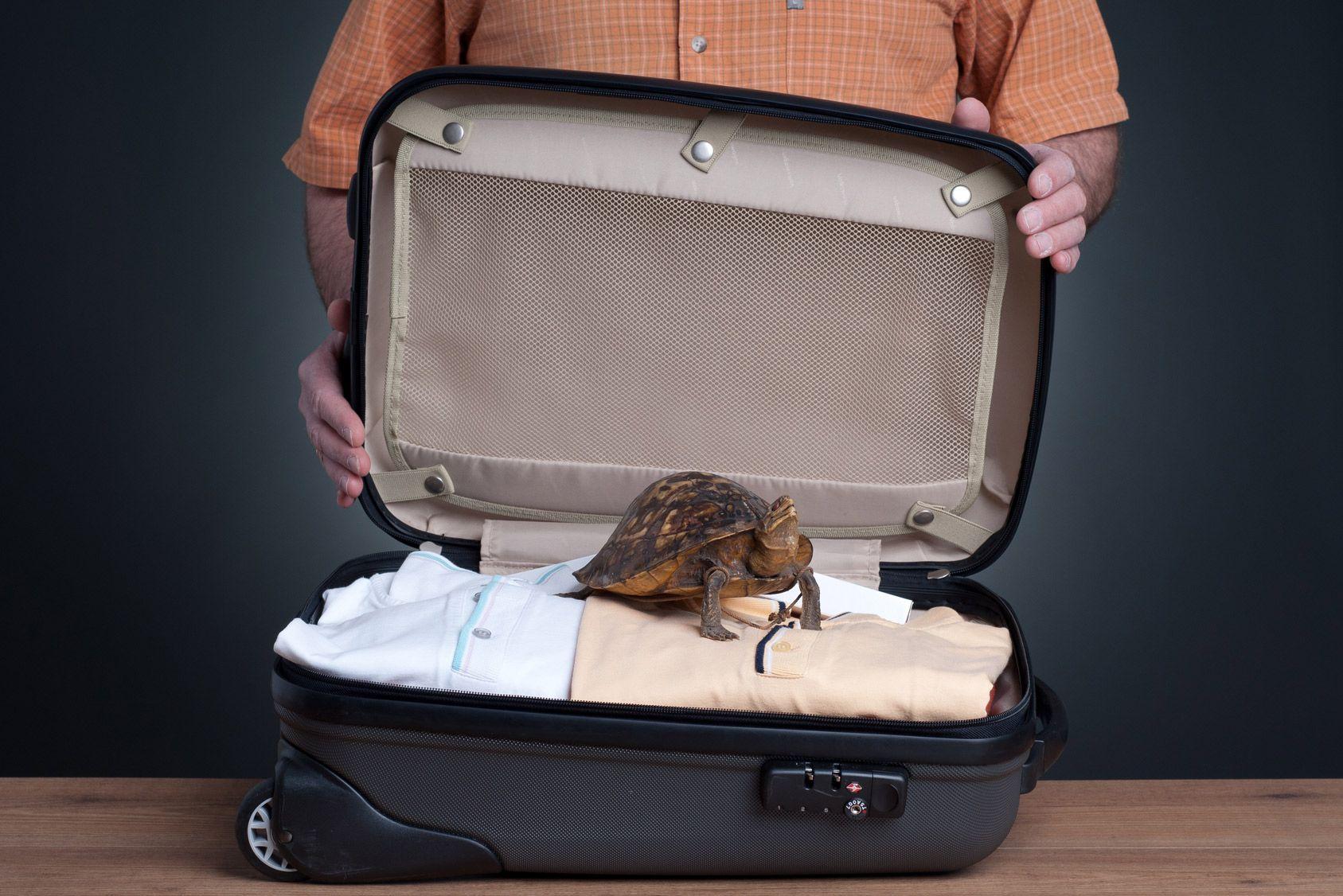 Vos souvenirs de vacances passeront-ils la douane?
