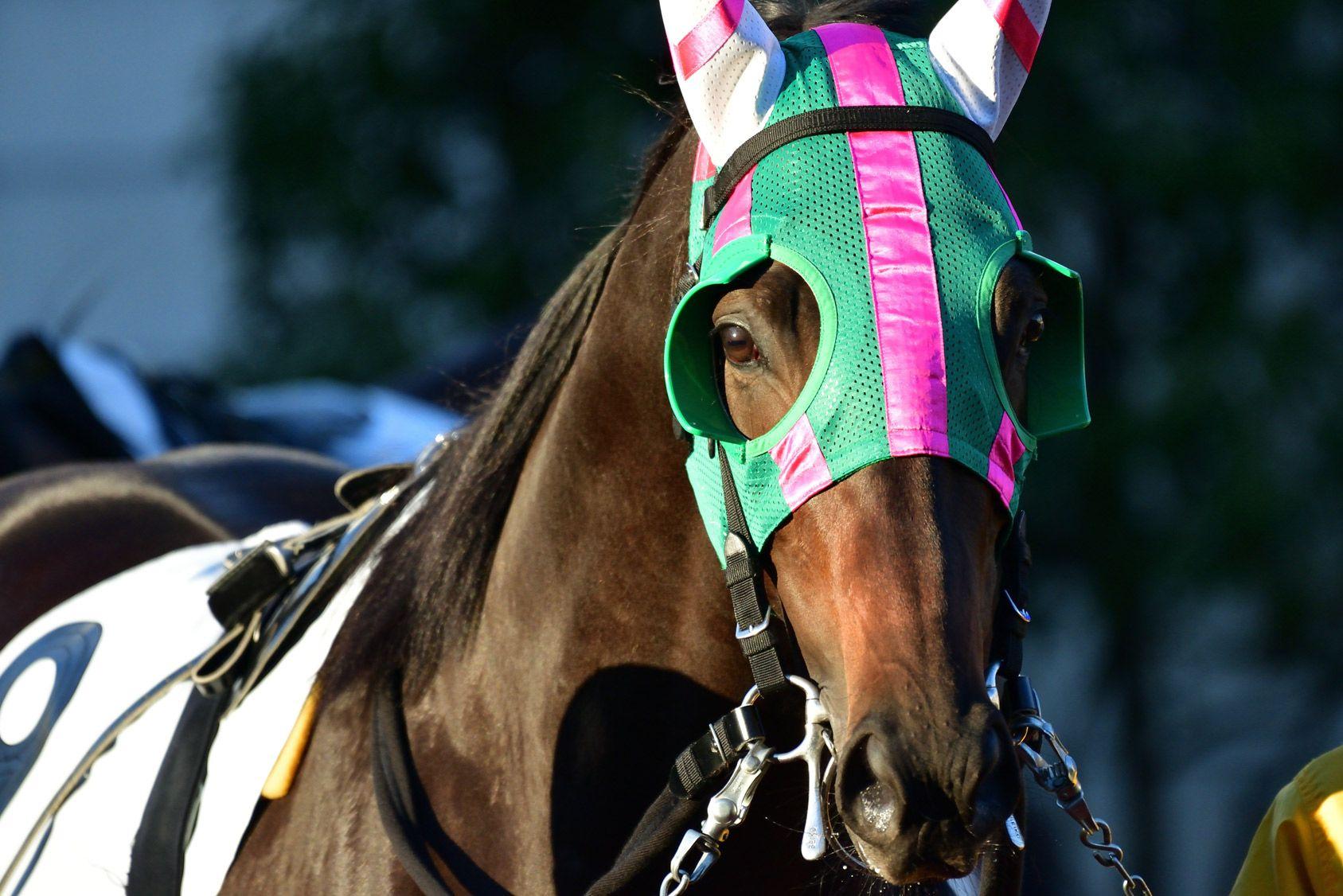 Acheter un cheval de course à plusieurs