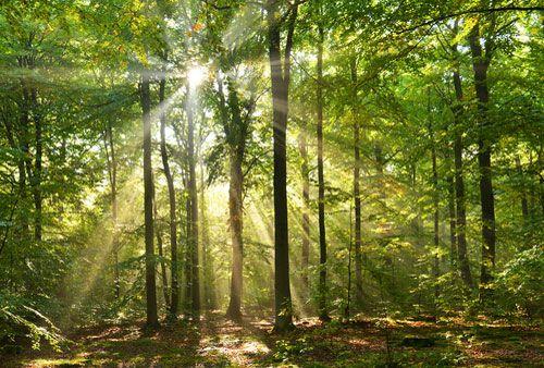 La stabilité des prix stimule les ventes de forêts
