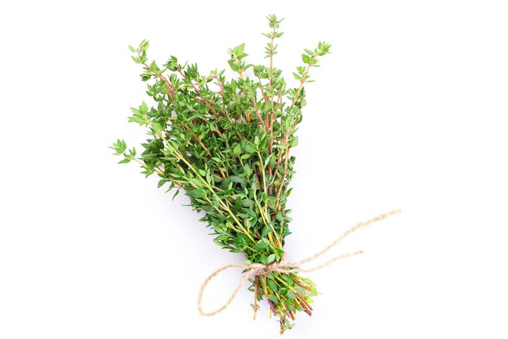 Le thym, l'herbe à tout faire