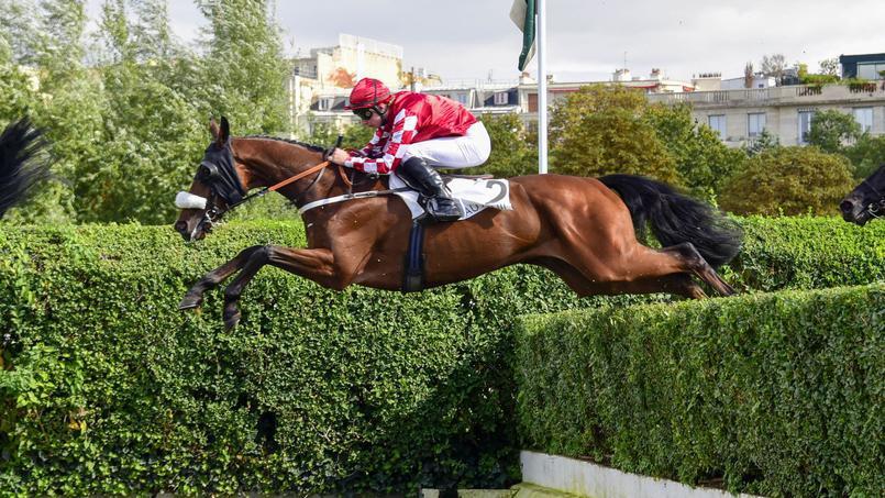 Une enquête pour maltraitance suite à la mort d'un cheval de compétition