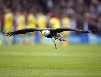 Crystal Palace-Chelsea : mascotte