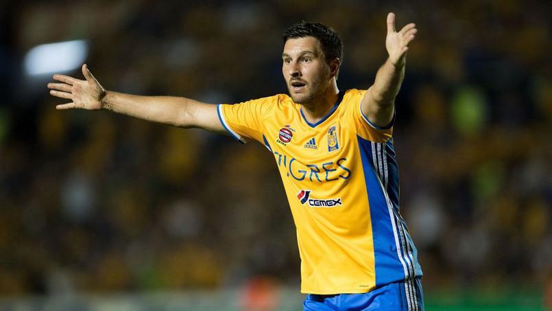Football - Transferts - Au Mexique, un perroquet chante à la gloire d'André-Pierre Gignac