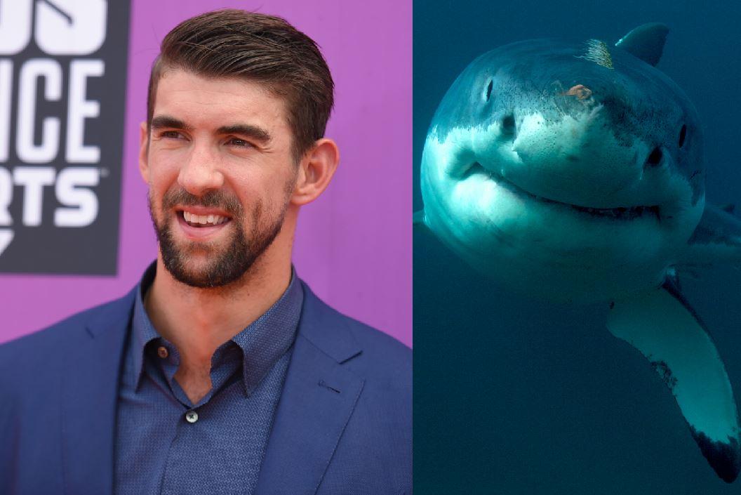 Natation - Michael Phelps aime nager... avec les requins (vidéo)