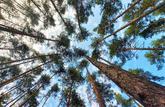 Le bois, une valeur d'avenir -- Partenaire