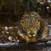 Amazonia - Bande annonce VF