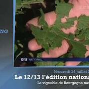 Les vignobles de Bourgogne dévastés par les intempéries