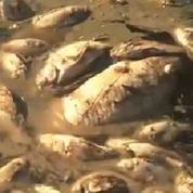 Brésil : dix tonnes de poissons morts dans un lac à Rio