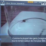 L'araignée la plus dangereuse d'Angleterre se multiplie