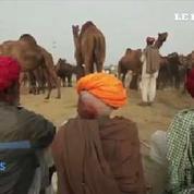 L'Inde accueille la plus grande foire de chameaux du monde