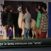 Serge le lama retrouve ses