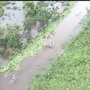 Lurel à La Réunion: Il y a des dégâts partout, l'agriculture est détruite