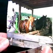 Cheval massacré dans la Loire: la piste du rituel satanique étudiée