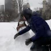 New York: Central Park, paradis des skieurs grâce à la tempête de neige