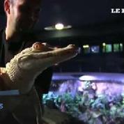 L'Aquarium tropical de Paris accueille deux alligators albinos