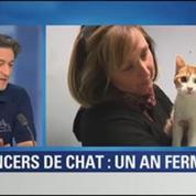 BFM Story: L'auteur des lancers de chat condamné à un an de prison ferme