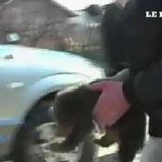 Trois jeunes ours secourus par des activistes au Kosovo