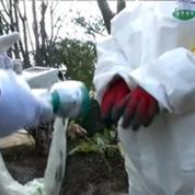 Fukushima: trois ans après la catastrophe, la décontamination se poursuit