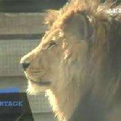Au nouveau zoo de Vincennes, le visiteur devient explorateur