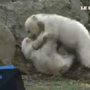 Nela et Nobby les oursons du zoo de Munich ont enfin trouvé leur nom
