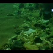 Pollution marine : Quand on plonge, on voit des déchets jusqu'à 2500m, explique l'Ifremer –
