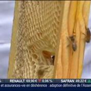 L'insolite du jour: Sauver les abeilles en parrainant une ruche, Paris est à vous
