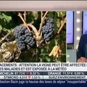 Comment faire pour investir dans le vin ?: Christian Fontaine, dans Intégrale Placements –