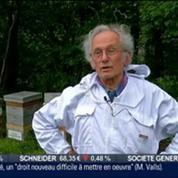 L'insolite du jour: Donner un toit aux abeilles en parrainnant une ruche, dans Paris est à vous –